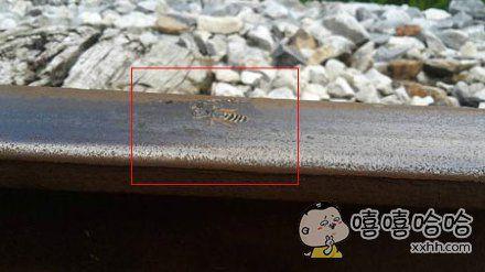 一只卧轨自杀的蜜蜂