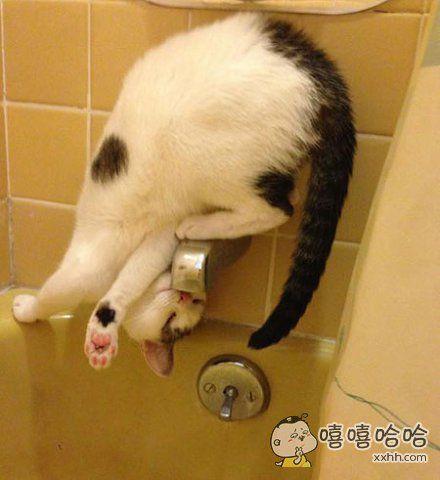 一只正在挑战高难度喝水动作的喵星人