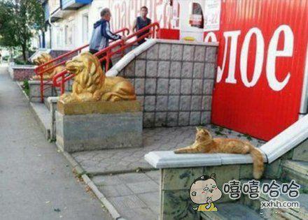 喵星人:其实,其实我也是金狮毛王