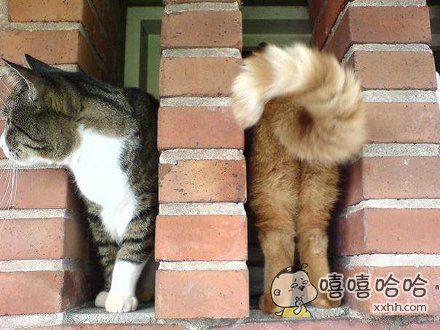 黄猫子进去,黑猫子出来