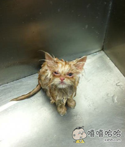 """""""我这么信任你,而你竟然敢给!我!洗!澡!!!!"""""""
