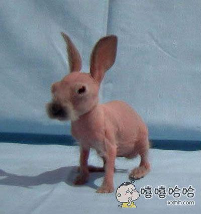 剃掉毛的兔子长这样