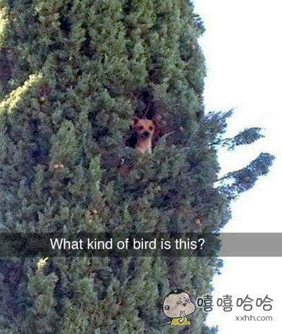 咦,树上是什么鸟