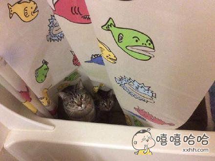 这就是你给我承包的鱼塘?