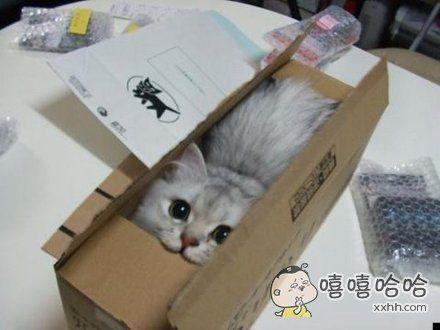 您的纸盒已送到