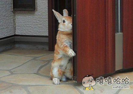 一网友出门上班发现门没关好,结果一回头就发现他家兔子这样望着自己。。。