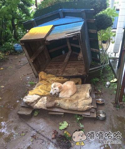 岛国遭遇强台风,灾民受害严重