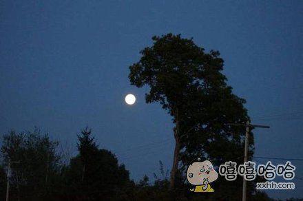神奇的树影
