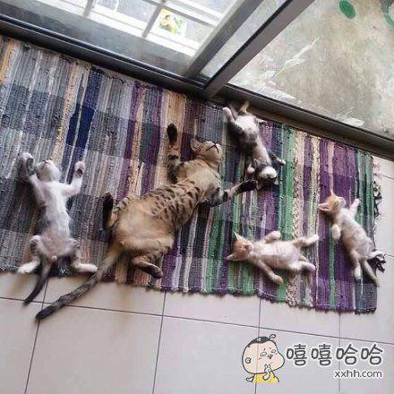 早晨,就看到家里的小喵星人和喵爸爸用着一模一样姿势躺在地上睡觉。一看就知道是亲生的