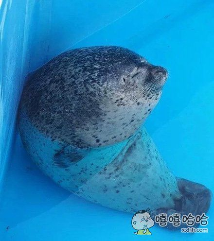 被海豹睡觉的样子萌翻了