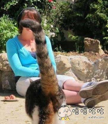 抢镜谁最强,猫咪来帮忙!
