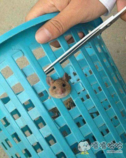 办公室的老鼠……一股蠢萌的气息