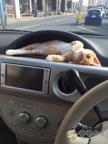 你让老司机怎么安心开车