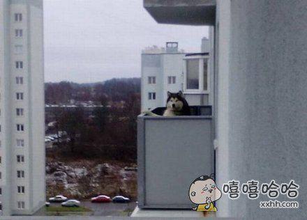 邻居家的傻狗