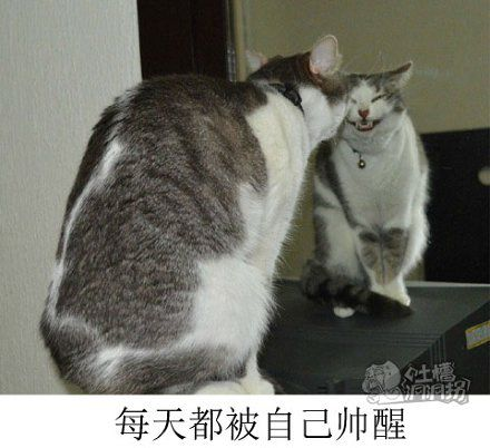 魔镜魔镜快告诉我,谁是这个世界上最美丽的喵儿?!