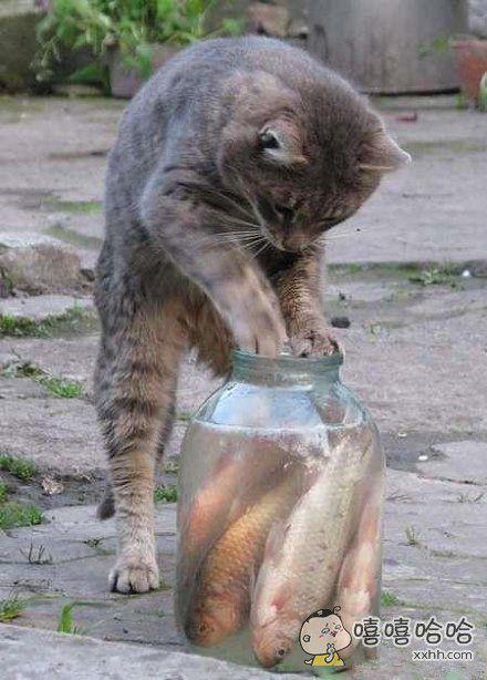 鱼罐头好是好,吃起来真麻烦