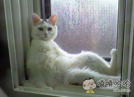 家里的猫没法养了,每次我洗完澡,回房间,都发现他坐在我房里的窗台上。。。窗台。。台。上