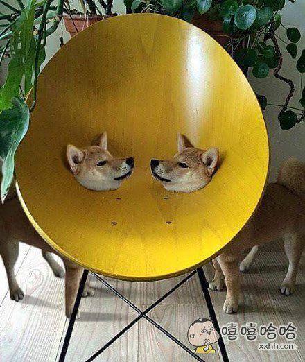 买了一款两只汪星人共用的嘴罩