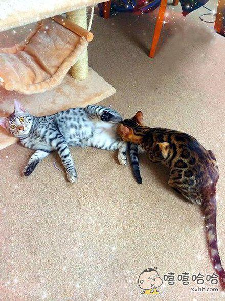 被发现了,整个猫都不好了