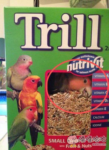 看到了吧,这款鸟粮是真的好吃