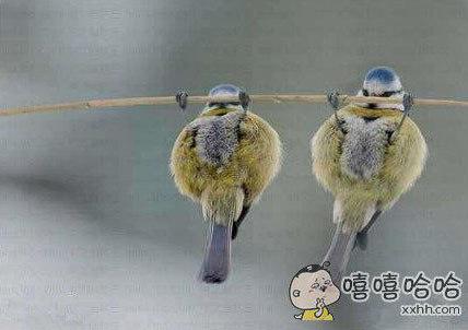 作为一只勤劳的鸟,要每天锻炼身体