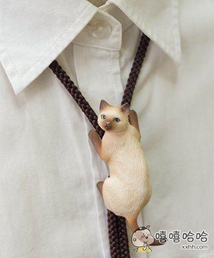 猫咪领结真的萌坏我了
