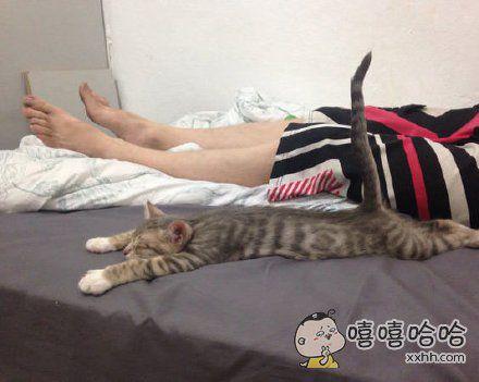 误服了某药的猫