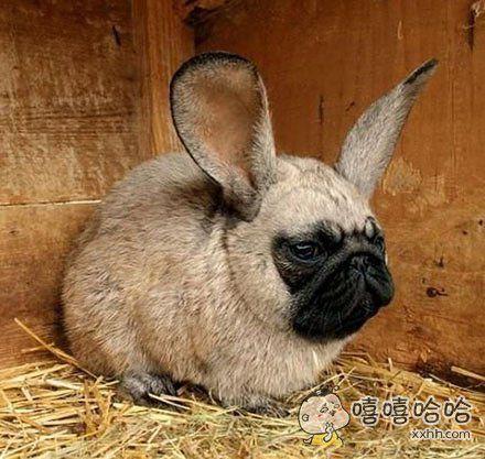 这是狗和兔的结晶?