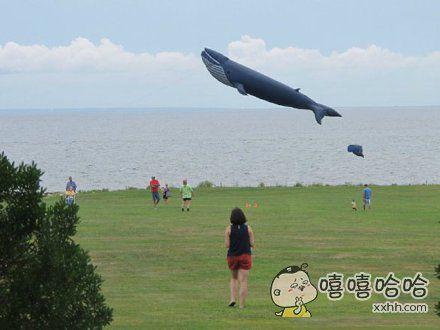 在海边看到有人放鲸鱼形状的风筝