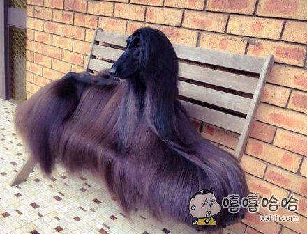 一头乌黑亮丽的秀发