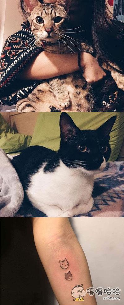 台湾一个女网友,特别喜欢猫,想把家里两个喵星人纹在胳膊上,精心设计了精美的图案,但她不知道纹身有多疼,最后,只纹了一个简单版