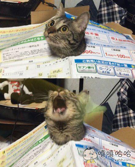 一位主人表示,自家猫咪看到新运来的快递箱子,立刻兴奋地钻了进去,凿破包装纸露出小脑袋美滋滋哒。。。然而她很快发现爪子都动弹不了,摘也摘不掉,顿时整个喵都不好了