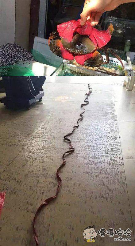 老板很大方,买绳子还赠大闸蟹