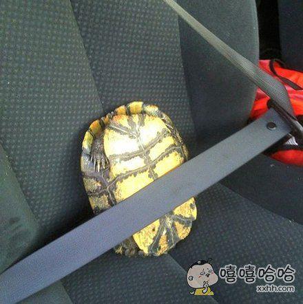 上车一定要系好安全带哟~