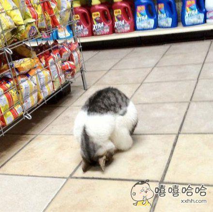 活捉一只在超市里面睡着了的喵星人
