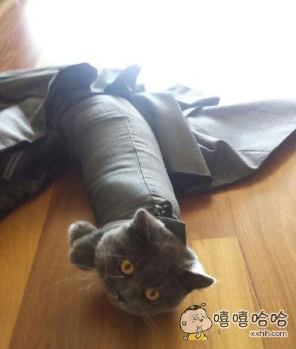 忘记把衣服挂起来,第二天早上发现困住了一只猫