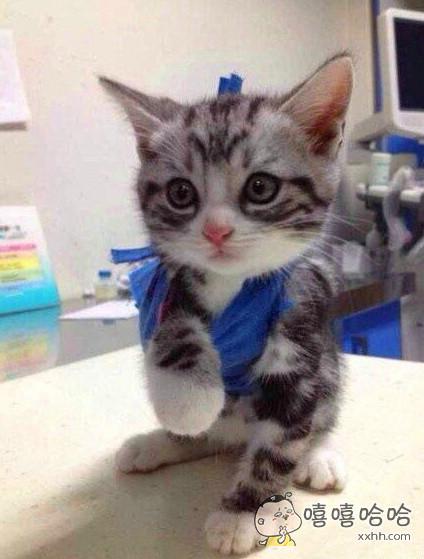 一只骨折去复诊的招财猫