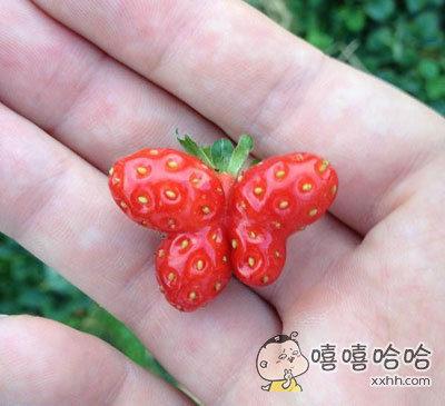 捕获一只蝴蝶草莓