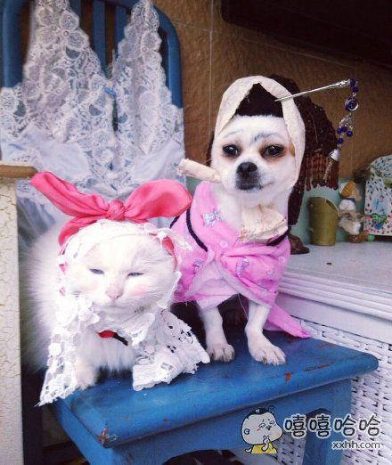 愚蠢的人类,大过节的让我扮兔子。。。