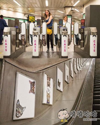 最近,喵星人终于攻占了伦敦……伦敦地铁的广告牌全部换成了猫咪