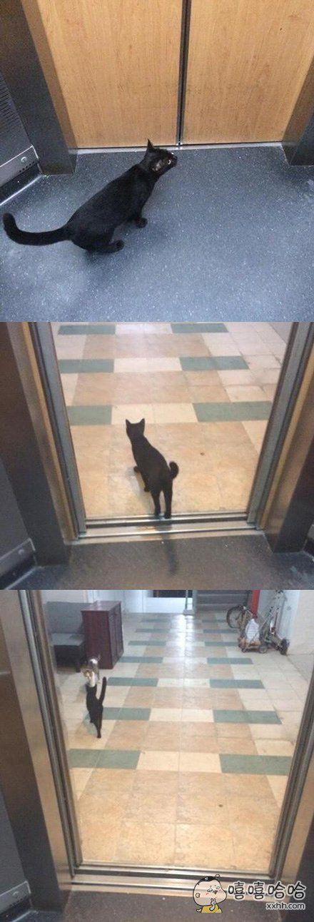 网友偶遇一只搭着电梯去和女票约会的喵