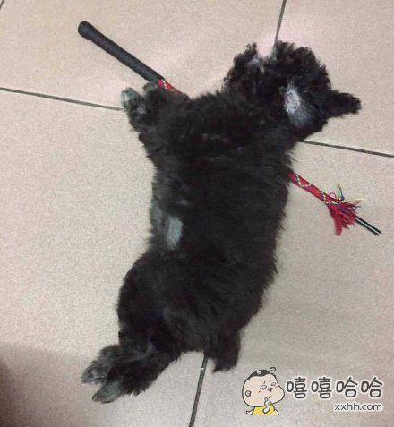 主人回家发现狗倒在地上