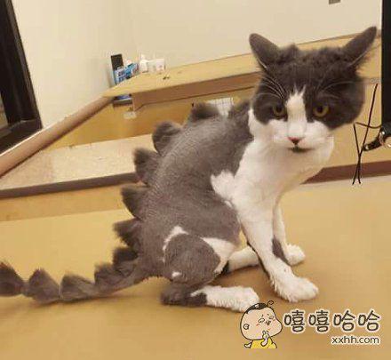 很期待这只猫照镜子看到自己的样子…