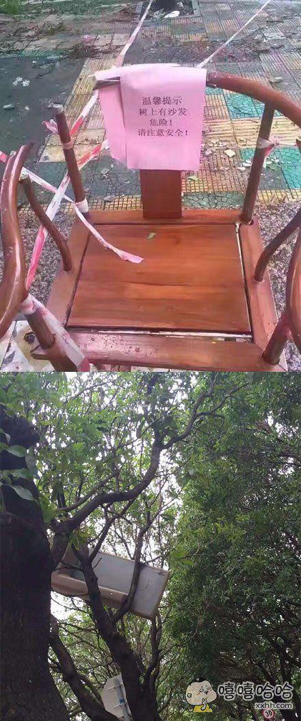 温馨提示,树上有沙发,危险!