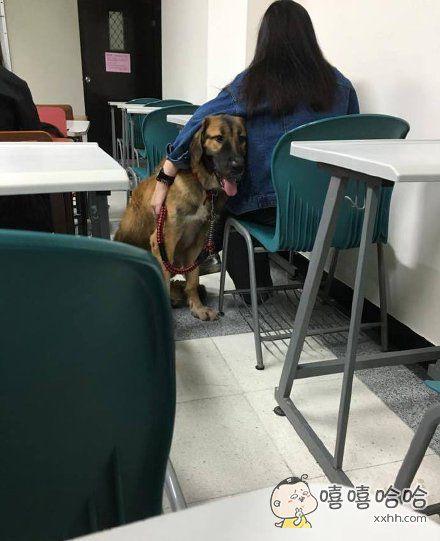 教室里来了一位新同学