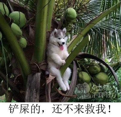 树上qi个狗,问:一共几只狗