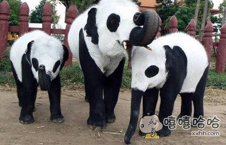 我读书少,难道这就是传说中的熊猫
