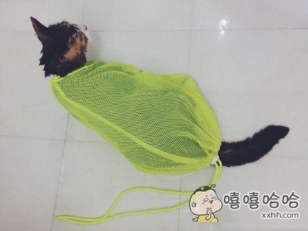 洗猫袋真是个好东东,为虾米早木有发现它