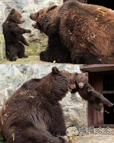 当熊孩子惹怒了它妈……也是霸气