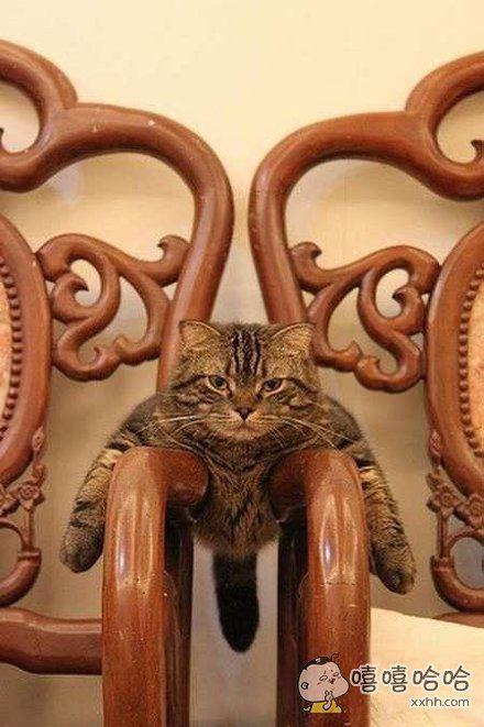 我就知道沙发这个位置一定是我的